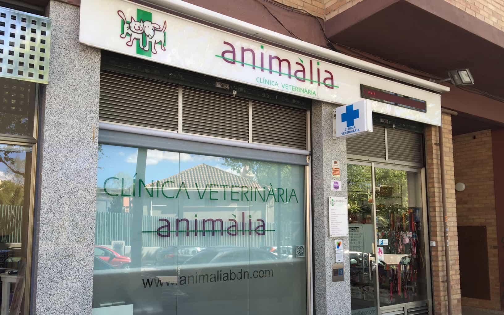 ANIMALIA ENTRADA